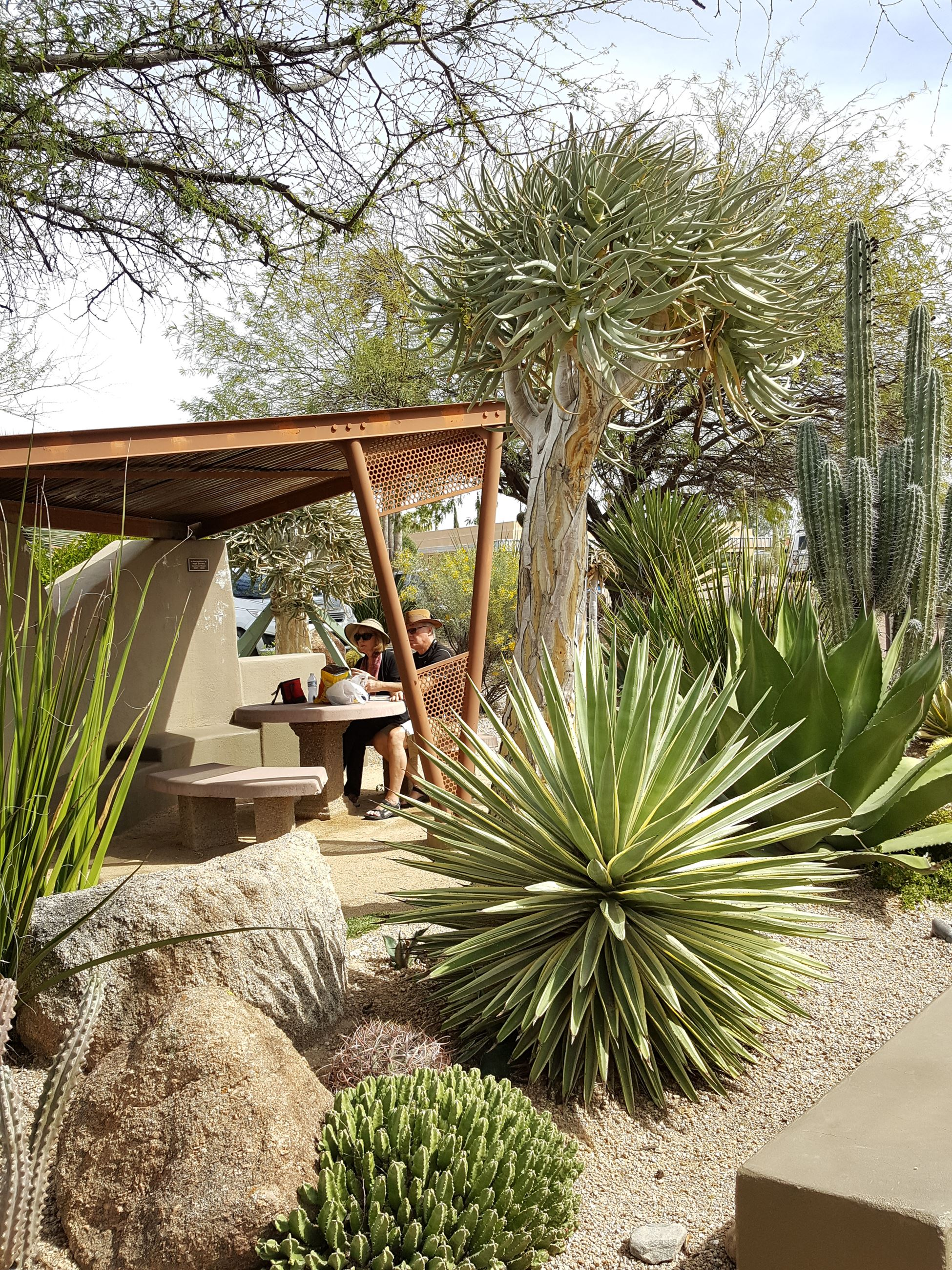 Welcome to the Carefree Desert Gardens | Carefree, AZ - Official Website